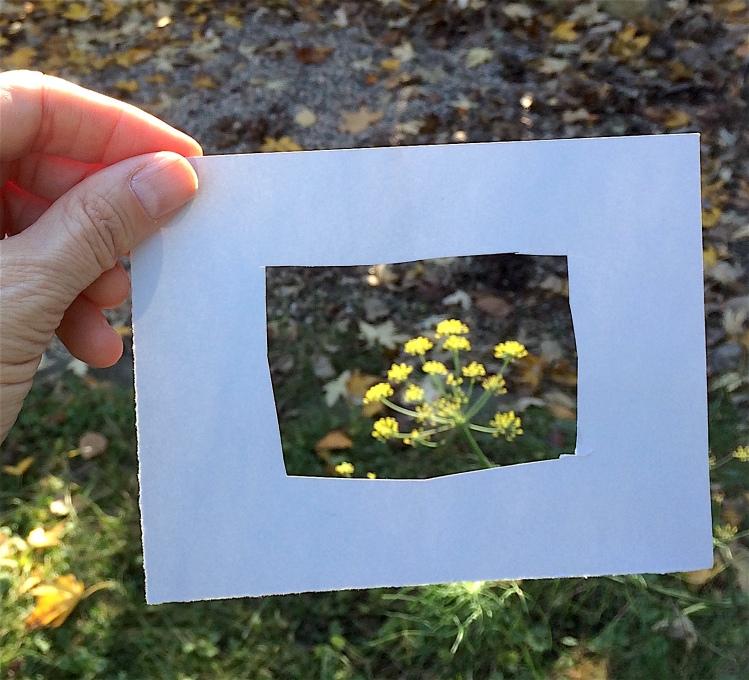 frame-viewfinder-2-img_3596