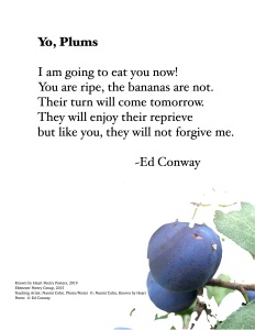 """Yo Plums"" by Ed Conway"